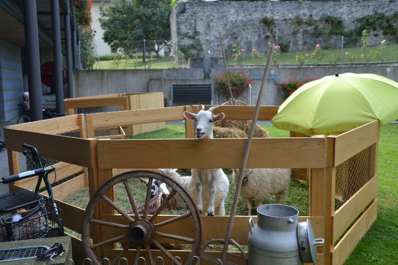Notre cour se transforme en ferme de plein air!
